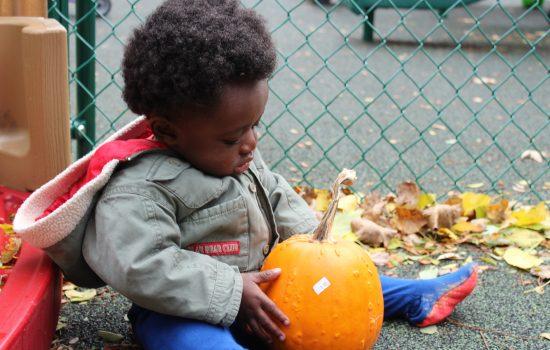 IR Pumpkin